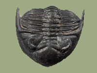 Logo Trilobit